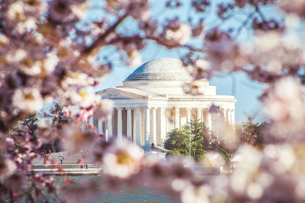 Cherry Blossoms 2018 - 014.jpg