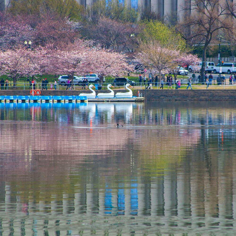 Cherry Blossoms 2017 - 015.jpg