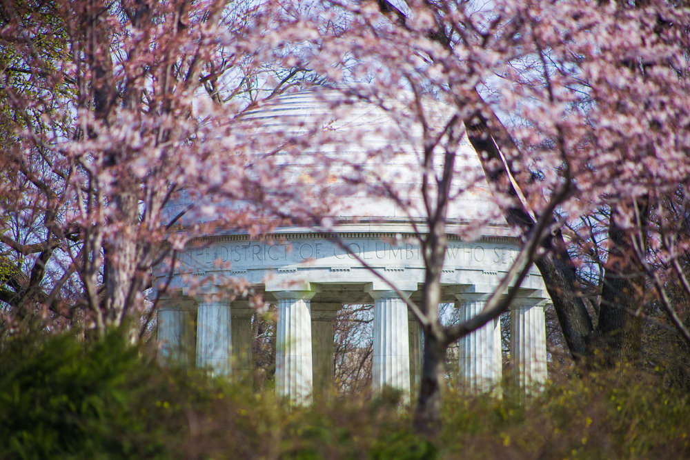 Cherry Blossoms 2017 - 012.jpg