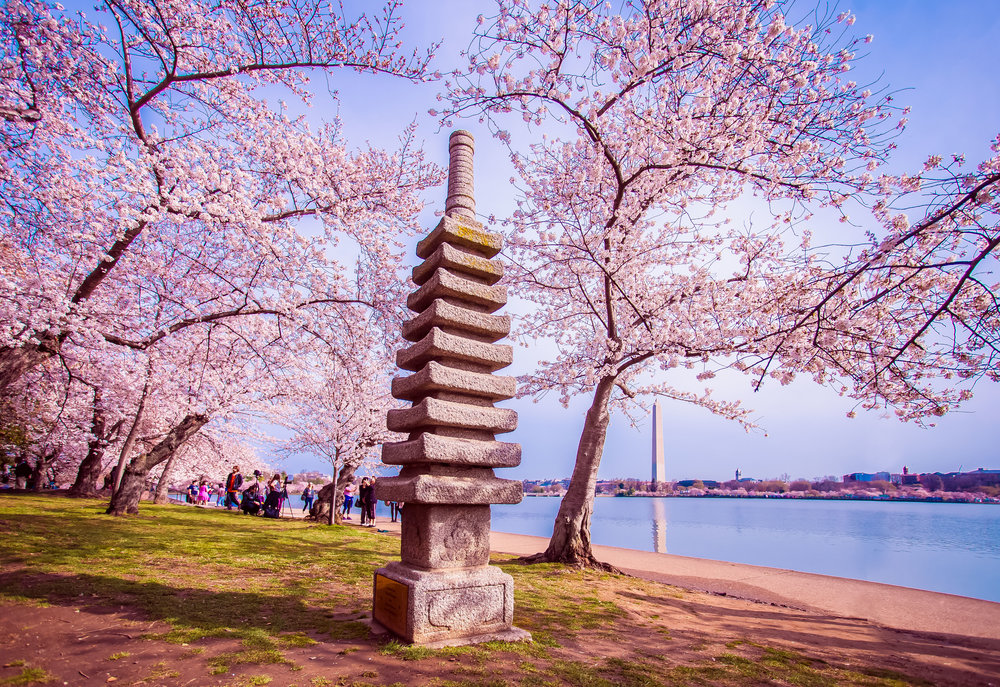 Cherry Blossoms 2017 - 010.jpg