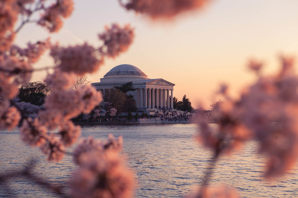 Jefferson Memorial - Brazilian Rachel Cherry Blossoms-006.jpg