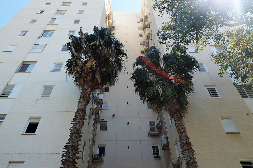 Untitled (Palm Tree)  TelAviv Israel 2016