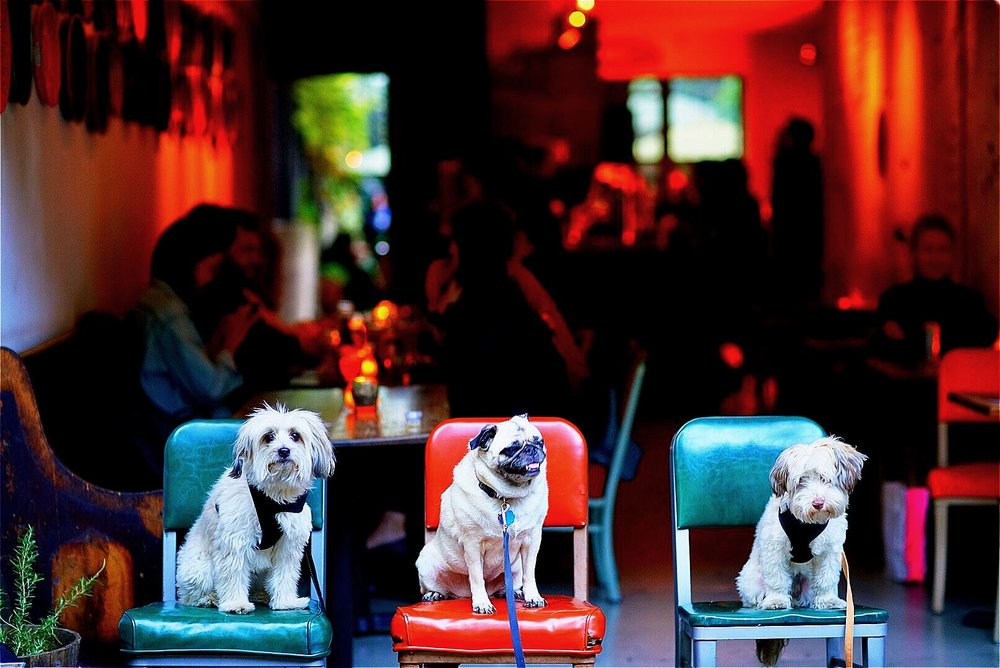 dogs in front of bar
