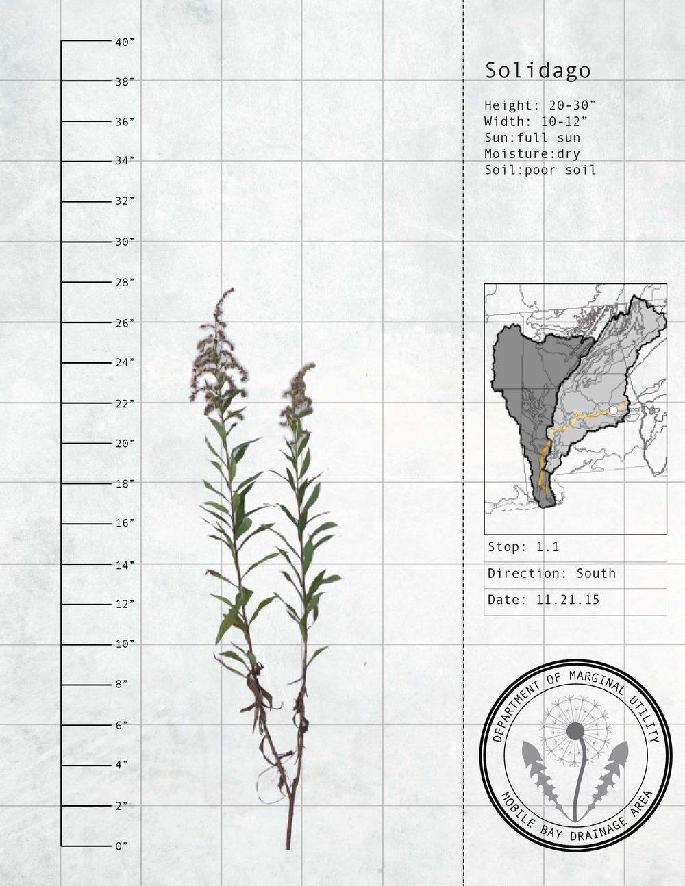 Plant Fact Sheets 3.jpg