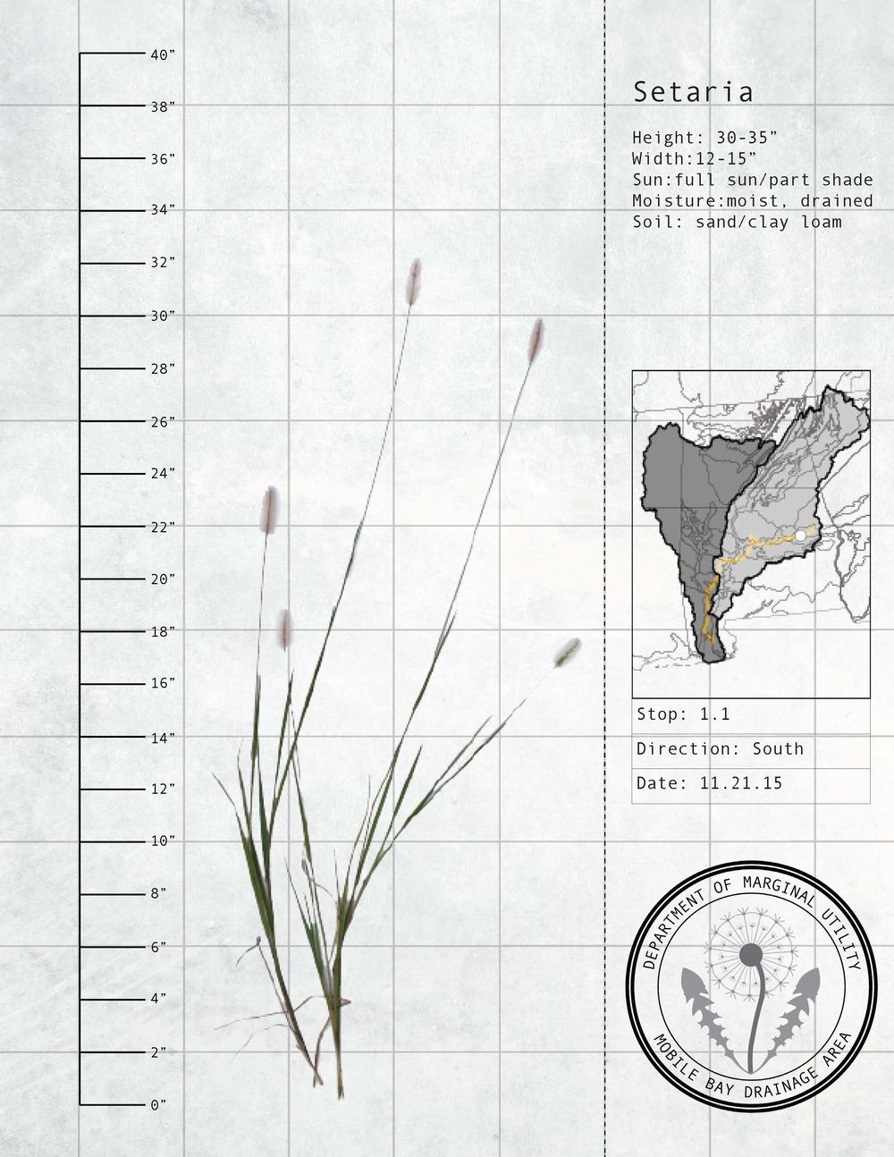 Plant Fact Sheets 6.jpg