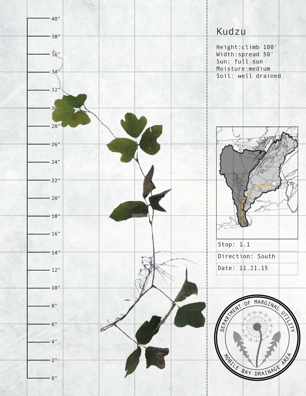 Plant Fact Sheets 7.jpg