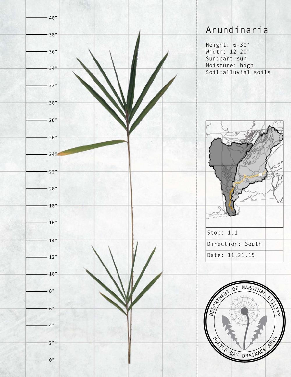 Plant Fact Sheets 9.jpg
