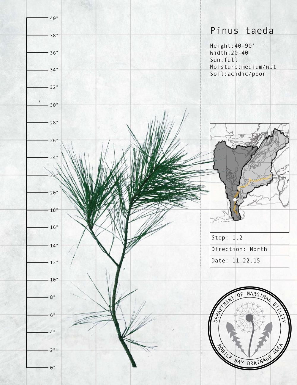 Plant Fact Sheets 14.jpg