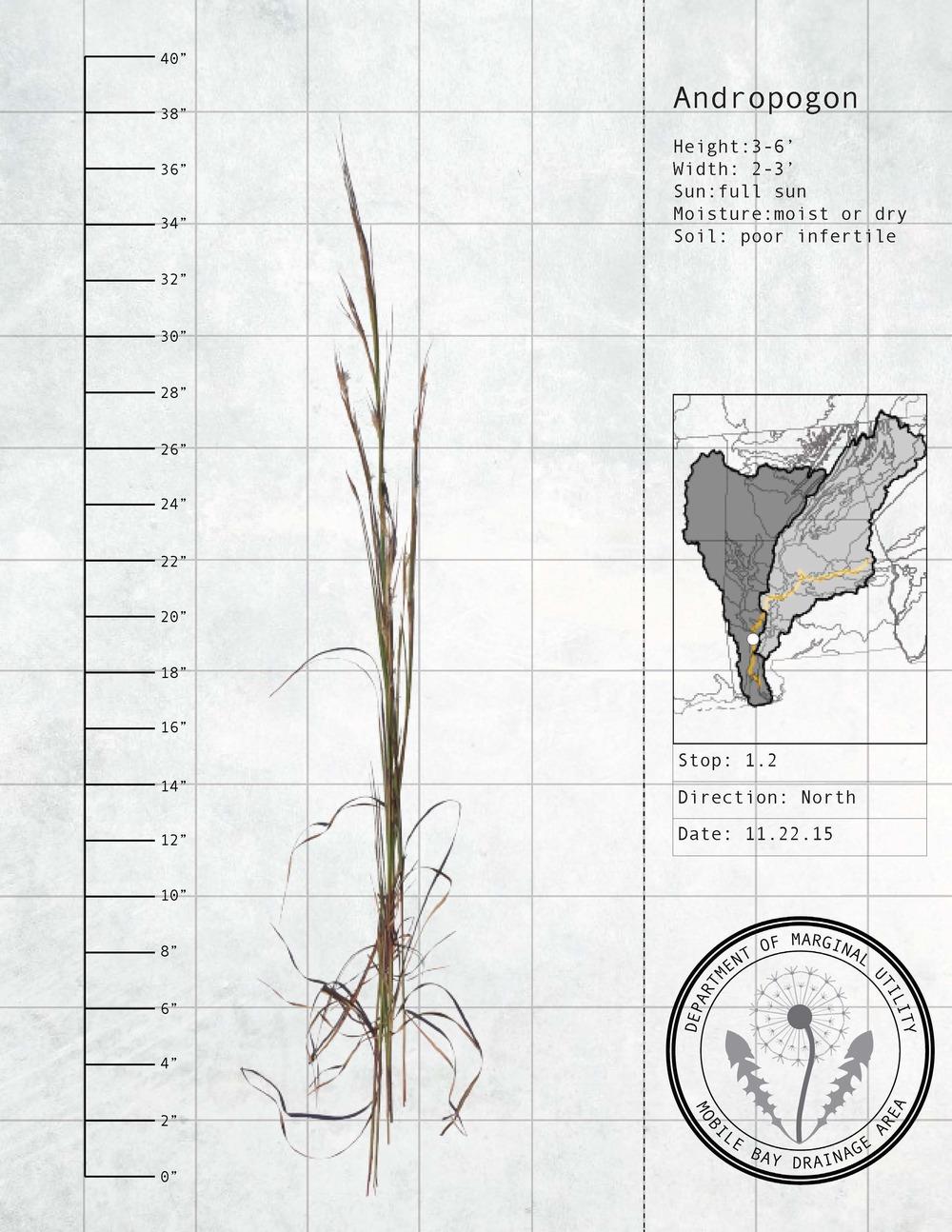 Plant Fact Sheets 17.jpg