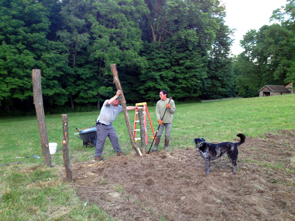 Peter & Wilson setting posts for the fencing with Summit supervising.