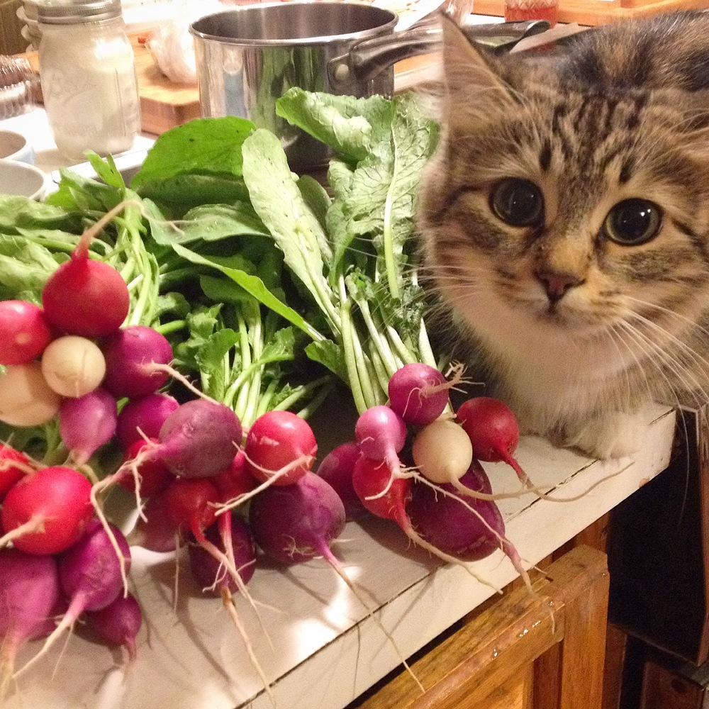 Kimchi the cat photobombing the easter egg radishes.