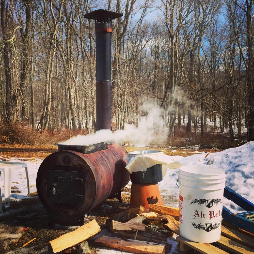 the sap was boiled for hours to reduce the water content