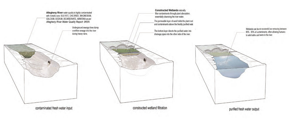 Constructed Wetland Study