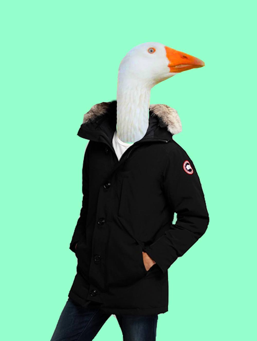 canada goose real name