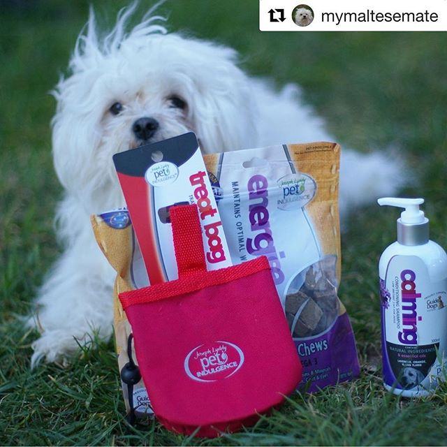 Head over to @mymaltesemate for a pawsome review of our products. 😘🐶 #josephlyddypetindulgence #dogsofinstgram #puppy #dog #petstyle #pet #review #reviews #products #productreview #dog #dogs