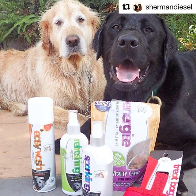 "#Repost @shermandiesel (@get_repost) ・・・ ""Hey Sherman, looks like the word is out. You are one stinky pooch. Luckily @josephlyddypetindulgence has sent a rescue package. Now your scent is a delicious mint, lime-coconut smell. Much better than the dead fish smell you like to run with. Oh and the treats, obviously they must be for me. "" 🙄"" I have one vice D, one vice. Besides all josephlyddy products are natural, ph balanced and paraben free. Also every purchase helps guide dogs Australia so my hobby helps a good cause. Can't say that about your purple ball fetish. ""#stinkysherm #lovesAGoodDeadSeaCreature#dogsofmelbourne #dailyfluffmelb #handsomebuggersclub #labradors_ #labsofmelbourne #retrieverlife #retrieverstagram #retrieveroftheday #groomingday#gloriousgoldens #siblingbanter#hankandhound #petstyle #josephlyddypetindulgence"