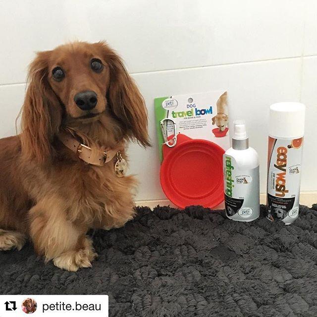 Gorgeous @petite.beau enjoying some @josephlyddypetindulgence goodies. Available @bestfriendspetcarecentres and online www.josephlyddypetindulgence.com.au ❤️ #dogs #love #celebrate #petstyle #josephlyddypetindulgence #puppylove #puppylove #dogsofinstagram