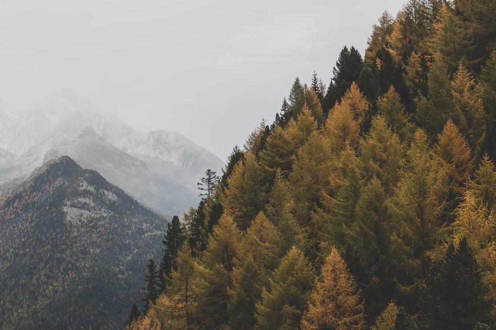 autumn-fog-forest-1287469.jpg