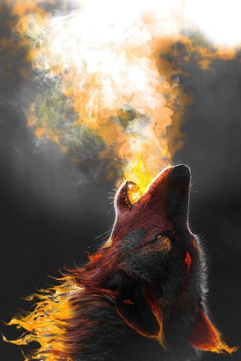 wolf ac4d0161a7445d6abcd33b09650b5f4f.jpg