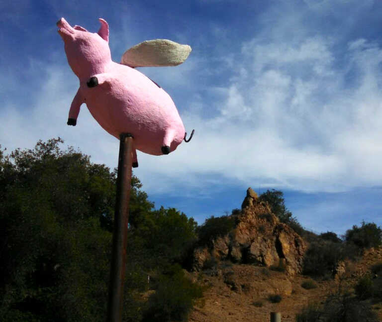At the inn of the seventh Ray, pigs do fly!