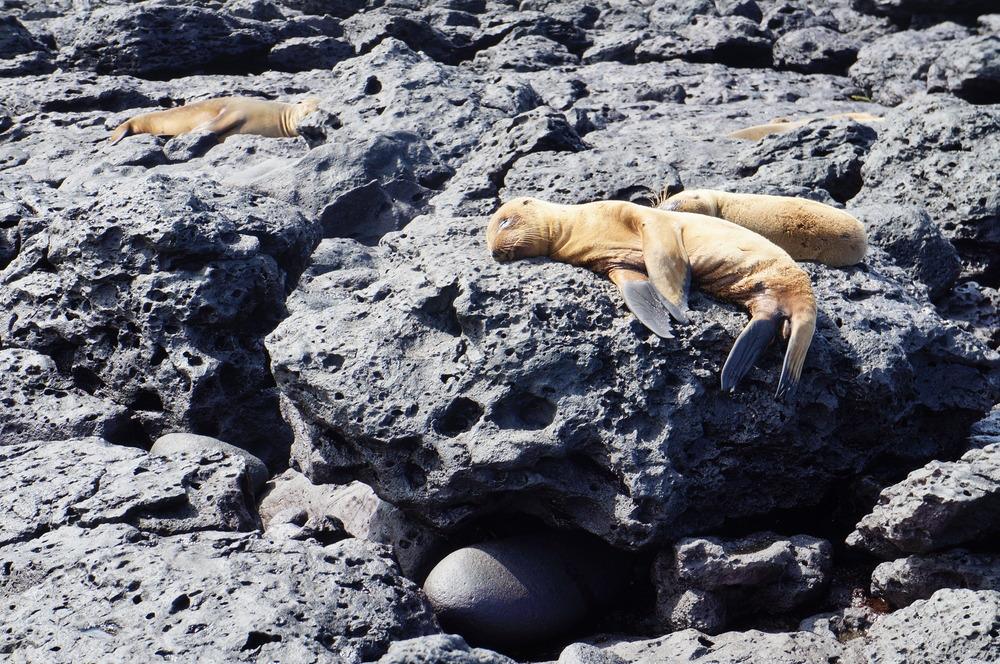 Ecuador MVI Galapagos (11).JPG