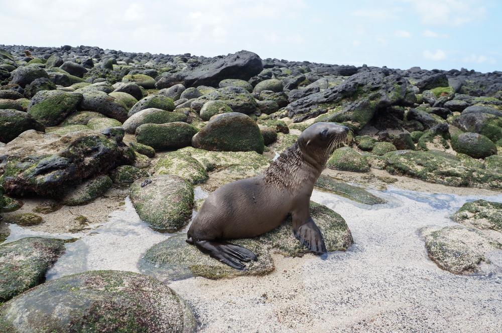 Ecuador MVI Galapagos (15).JPG