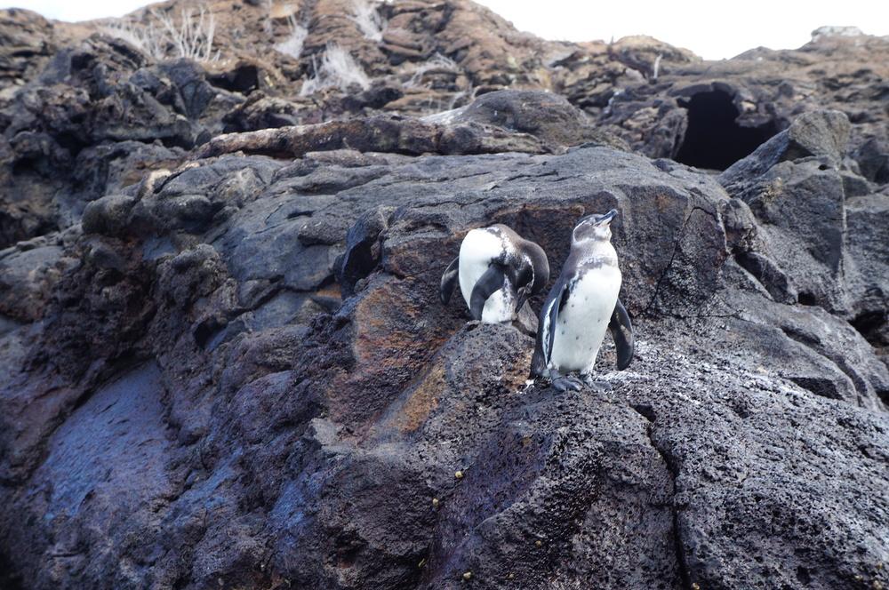 Ecuador MVI Galapagos (30).JPG