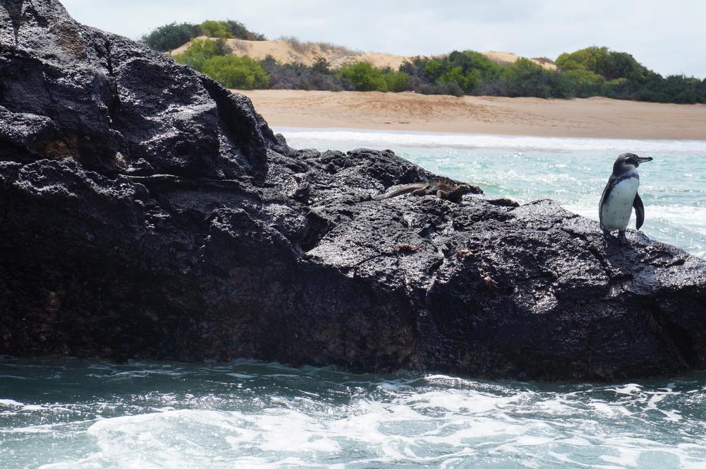 Ecuador MVI Galapagos (31).JPG