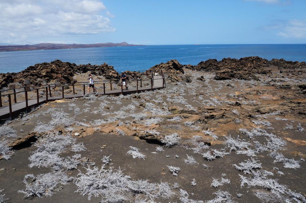 Ecuador MVI Galapagos (35).JPG