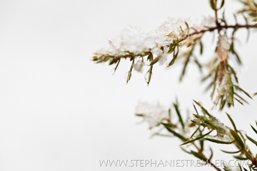 Lynden_Fine_Art_Snow_Water_Photographer_Photography_Print-104
