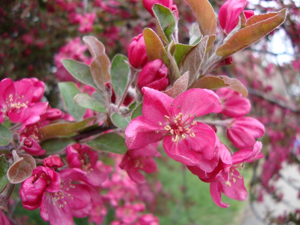 dcflowertree.jpg