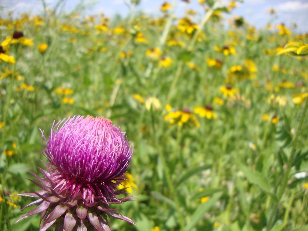 shakerhikepinkflower.jpg