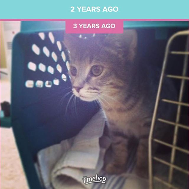 Five years ago, we brought Herschel home. I have never loved an animal like I love this aloof cuddly-on-her-one-terms girl. We have been paying anxious Albus a lot of attention the last few days, but she has been patient. Happy Welcome Home Day, Mersch. #adoptdontshop #herschelcat