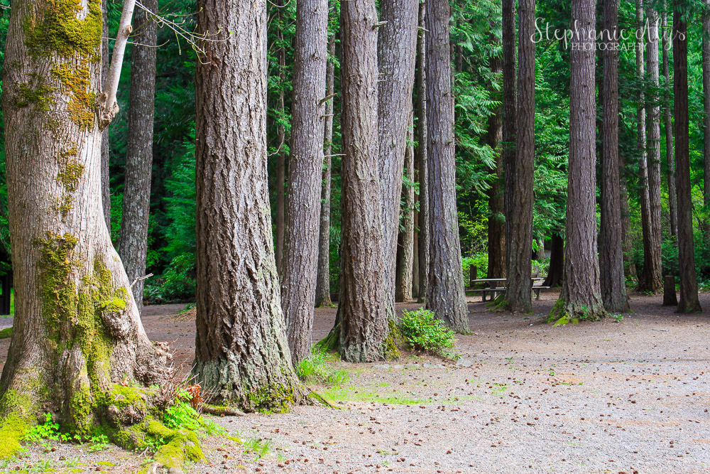 Stephanie Alys Photography • Scenic Beach State Park at Seabeck, Washington