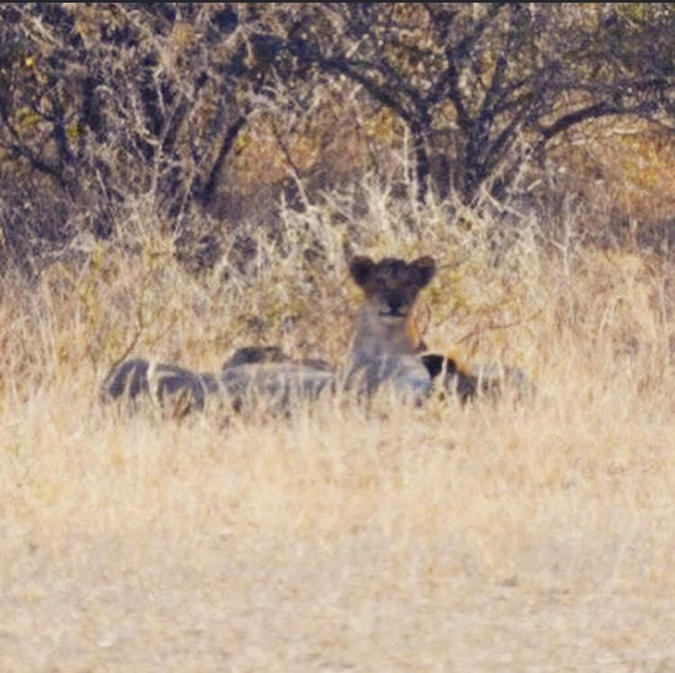 South Africa_Baby cub.jpg
