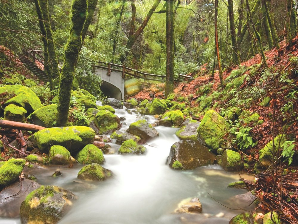Uvas Canyon, California -