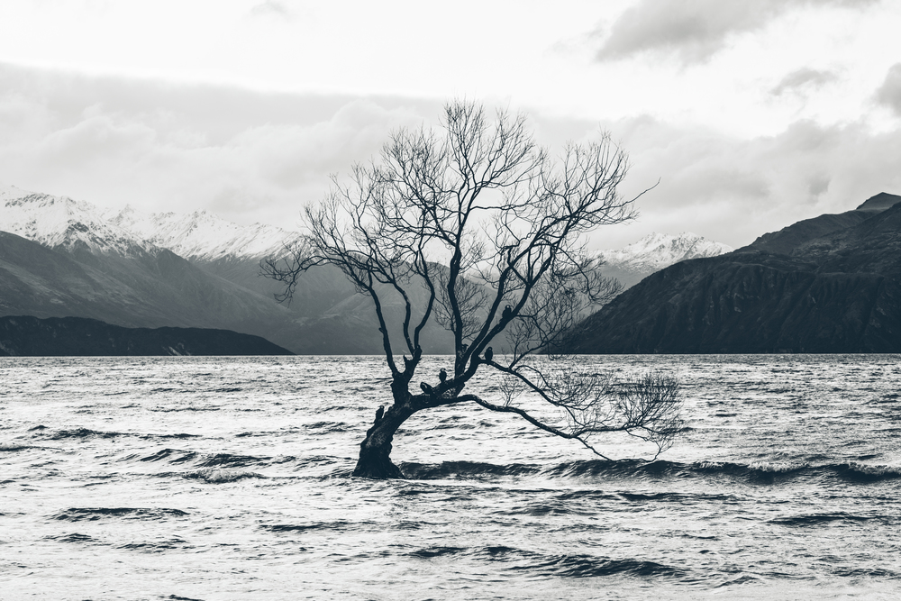 Lake Wanaka NZ-3.jpg