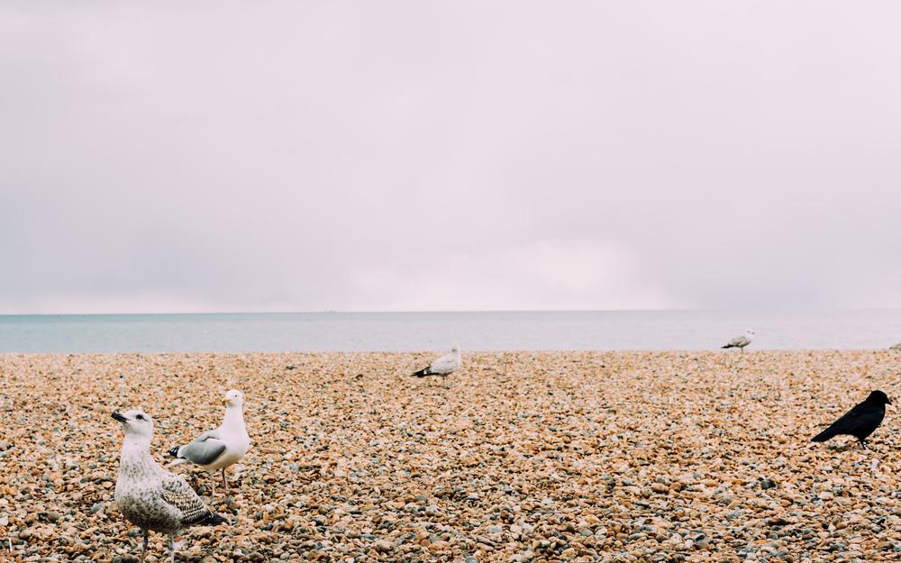 Canon5DSR_MPB_Brighton-17.jpg
