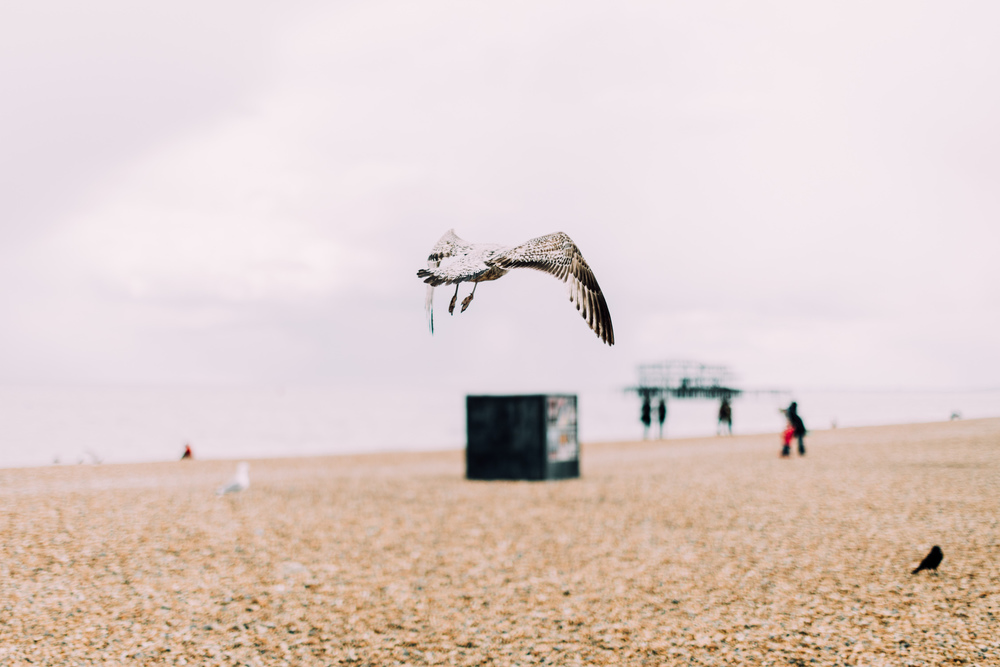 Canon5DSR_MPB_Brighton-18.jpg