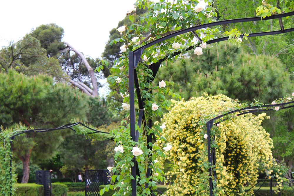 rose garden at retiro park.jpg