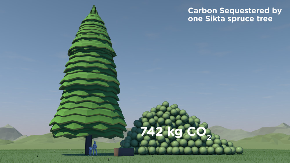 Tree_withpile0524Caption.jpg