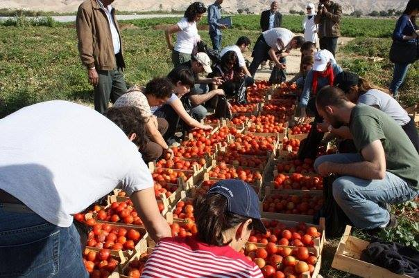 A group of young people who visited a farm and supported its owner to harvest tomato
