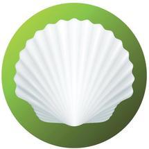 shellsmall2.jpg