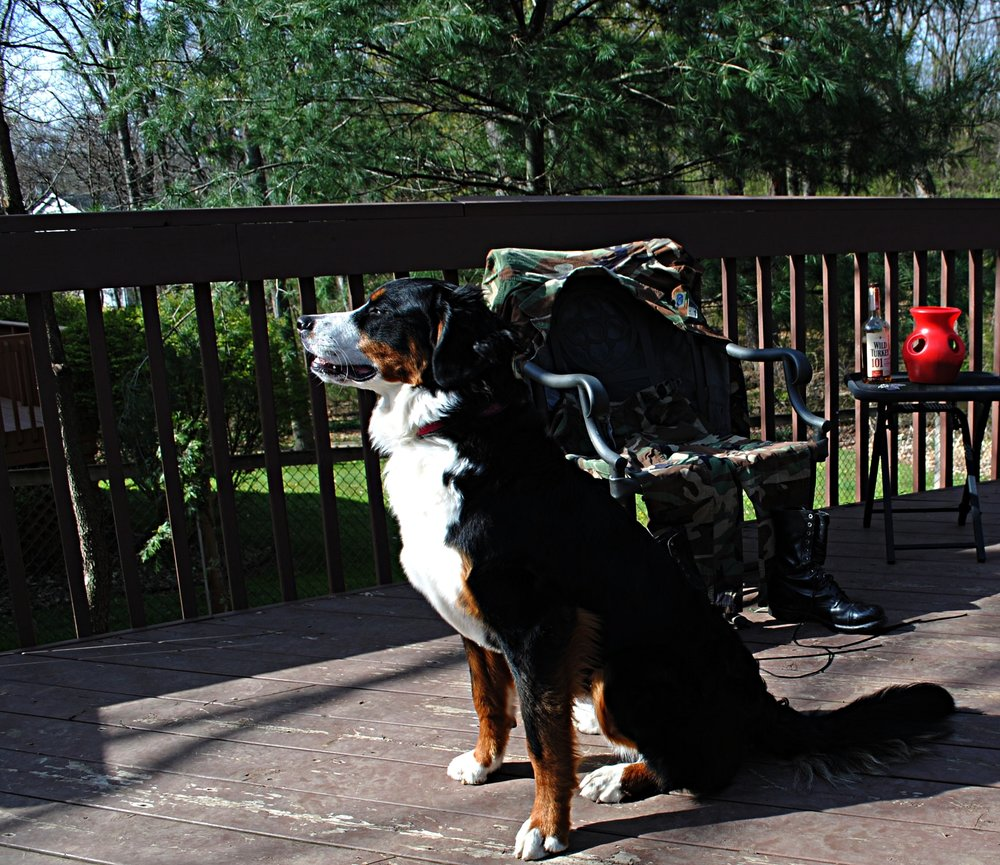 Here is a picture of my Bernese Mt. Dog, Macha. Although I never had or needed a service dog, I can say for certain that having dogs has helped me lead a fuller, happier life.