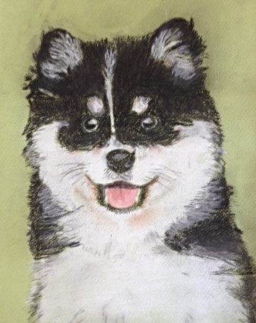 black and white dog in pastel