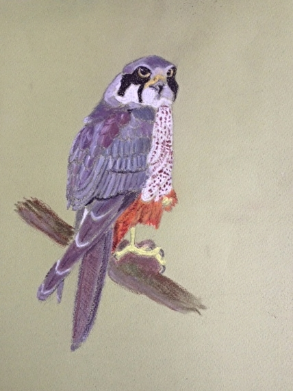 Bird of Prey-pastel
