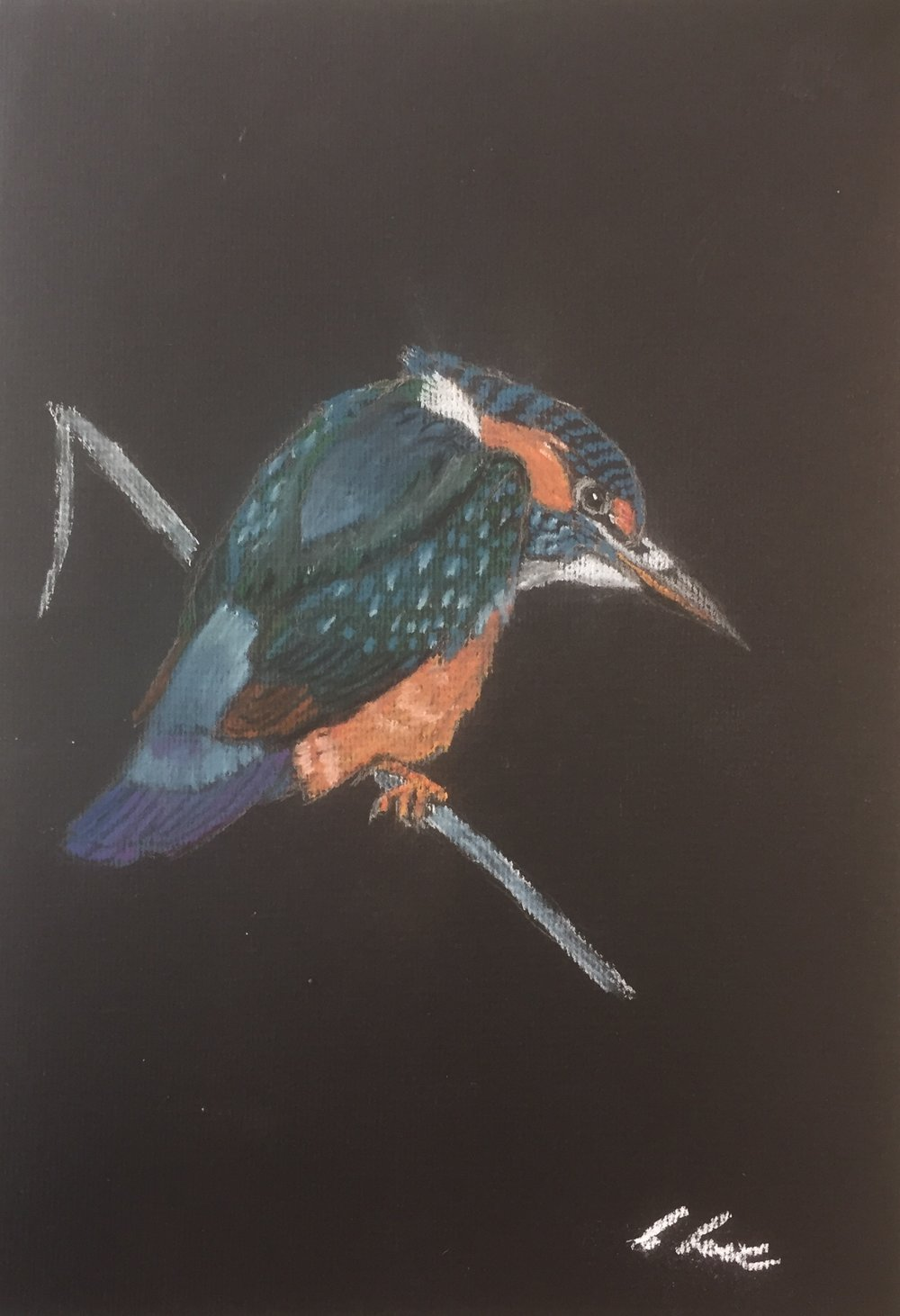 Kingfisher, Pastel pencil.