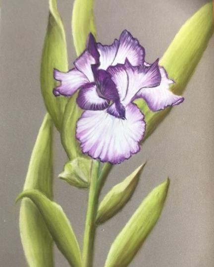 Linda+pastel+iris.jpg