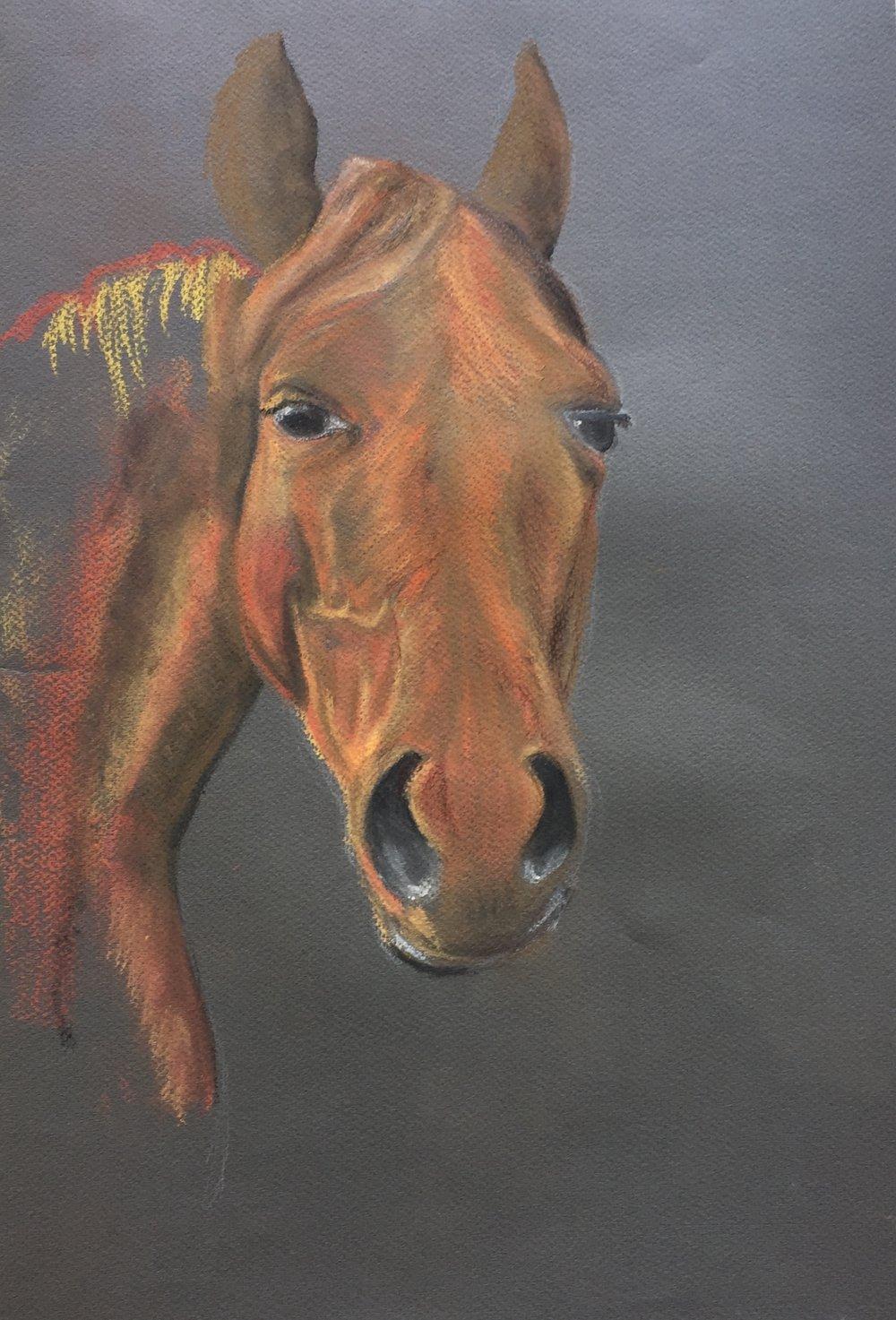 Anne horse.jpg