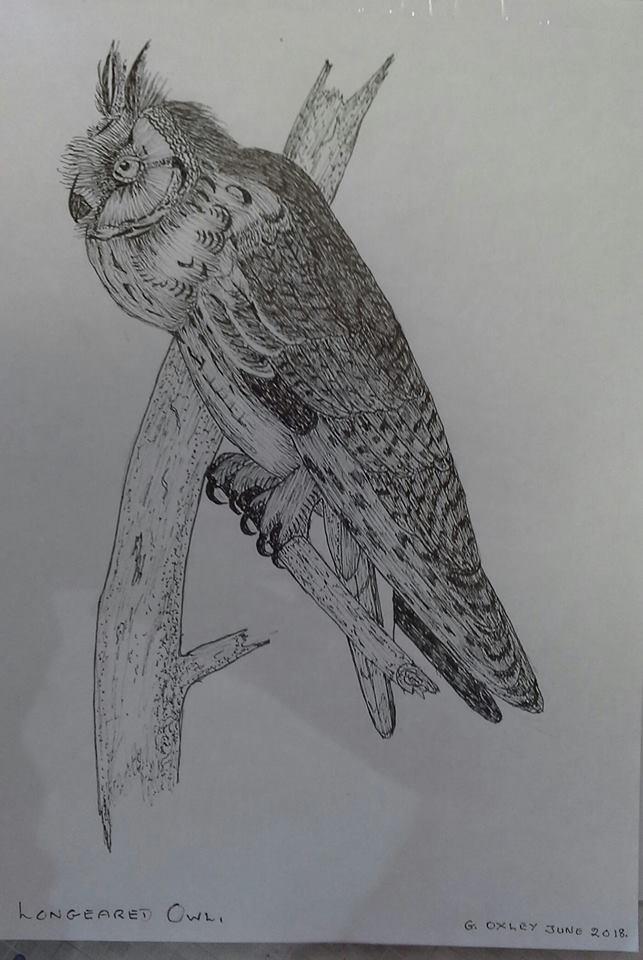 g oxley bird.jpg